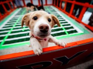 DIA hosts first-of-its-kind 'Puppy Bowl'