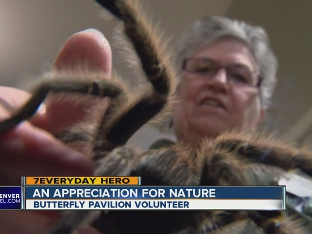 Volunteer helps the Butterfly Pavilion soar