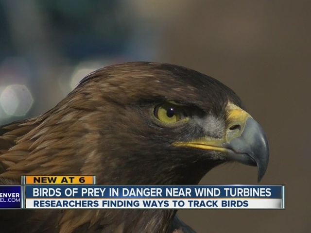 NREL test technology to prevent collisions between the birds and wind turbines