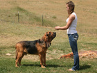 Handler, dog going to 140th Westminster Dog Show