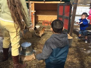 Live poultry banned from Colorado pre-schools