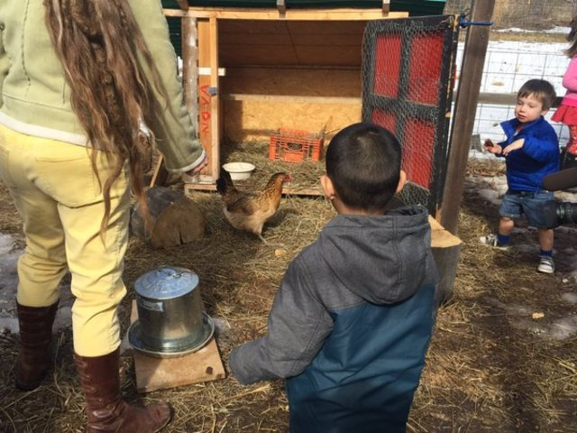 Colorado looking to remove chickens from schools