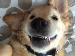 Puppy gets braces and somehow looks even cuter