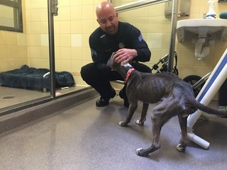 Who left this emaciated dog at the shelter?