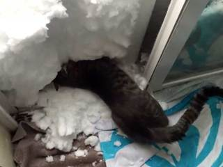 MUST SEE VIDEO: Cat builds a snow igloo