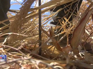 Farmers in Southeastern CO battle drought, winds