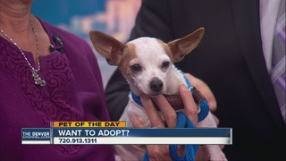 Pet of the day for April 9 - Ramona the dog