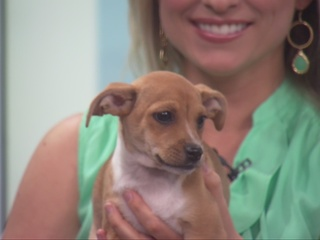 Pet of the day for April 10 - 4 adorable puppies