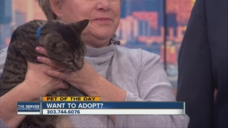 Pet of the day for April 16