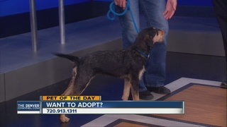 Pet of the day for April 23 - Anna the dog