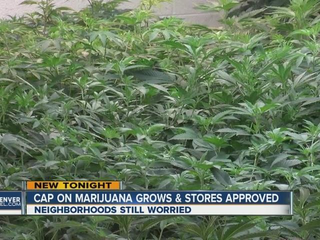 Denver council narrowly passes new caps on marijuana businesses