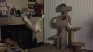 VIDEO: High-jumping cat flies through air