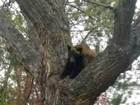 1st bear of the season spotted in Boulder