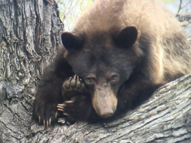 Bear sightings beginning in Boulder