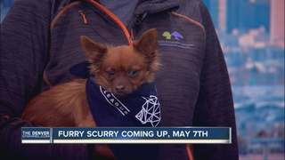 The 2016 Furry Scurry is approaching