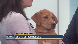 Pet of the day for May 8th
