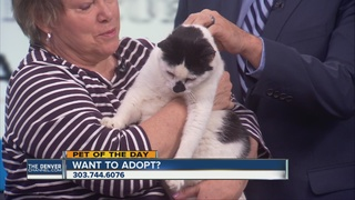 Pet of the day for May 14th