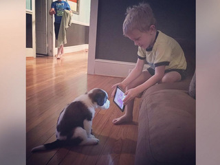 Boy trains puppy by showing him YouTube videos