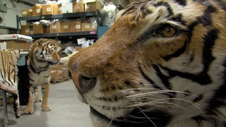 Inside the National Wildlife Property Repository