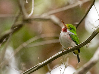 1/3 of N. American birds at risk of extinction