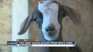 Franktown farmer: $1,000 reward for stolen goats