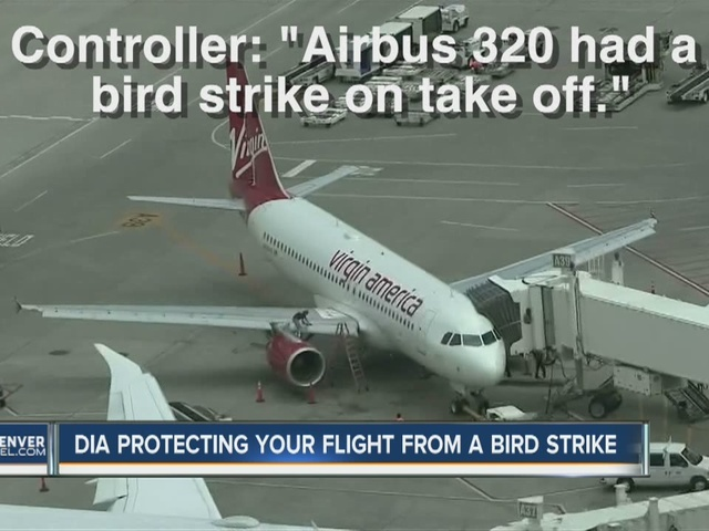 Bird strike forces Virgin America flight to make emergency landing at…
