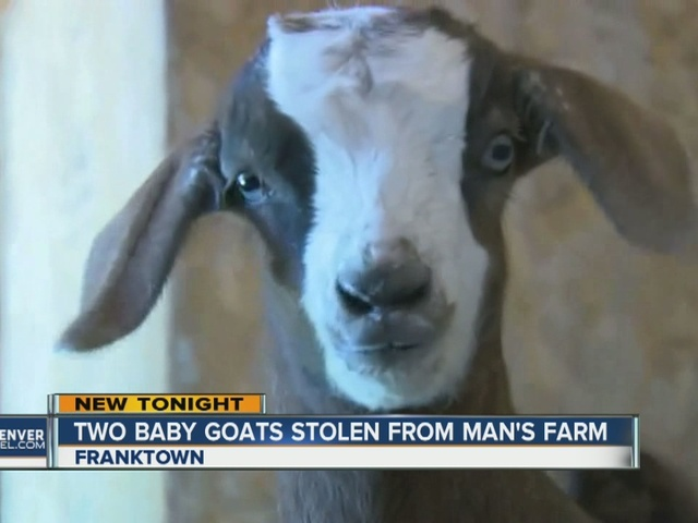 Franktown farmer offers $1,000 reward for stolen newborn goats