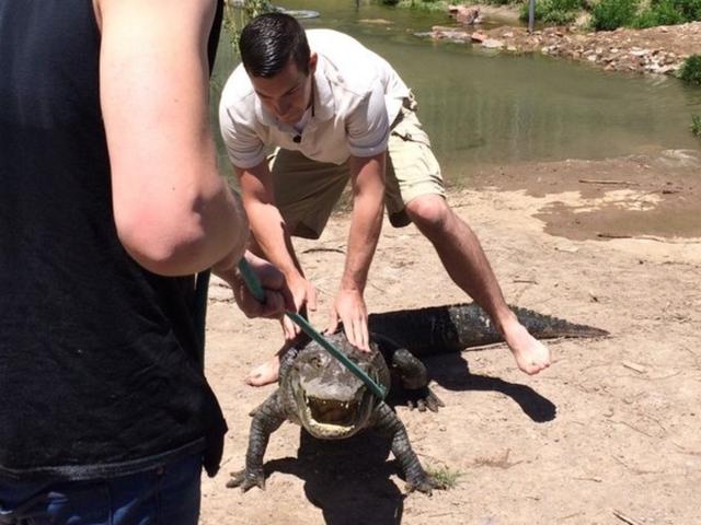 Exclusive look inside Colorado's alligator farm