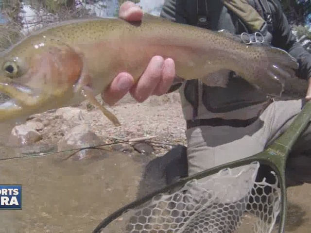 The Blue River offers Gold Medal trout water with an urban twist