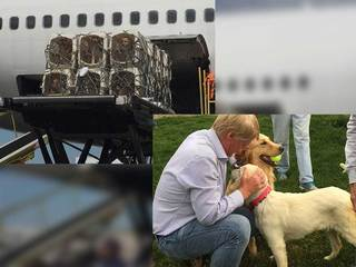 Dogs rescued from Turkey need homes in Colorado