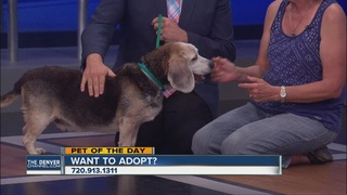Pet of the day for June 18th