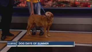 'Dog Days of Summer' helping dogs and cats
