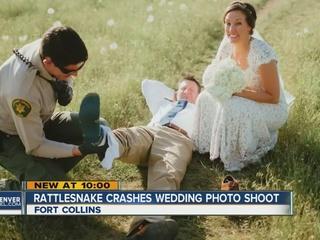Wedding crasher: rattlesnake bites groom
