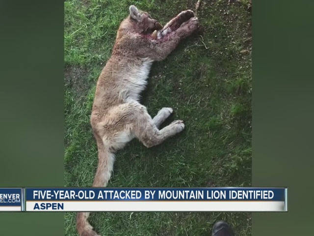 5-year-old attacked by mountain lion identified