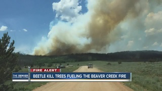 Beaver Creek Fire still active, 5% contained