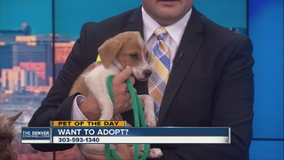 Pet of the day for June 26th