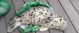 Seal pup removed from beach gets euthanized