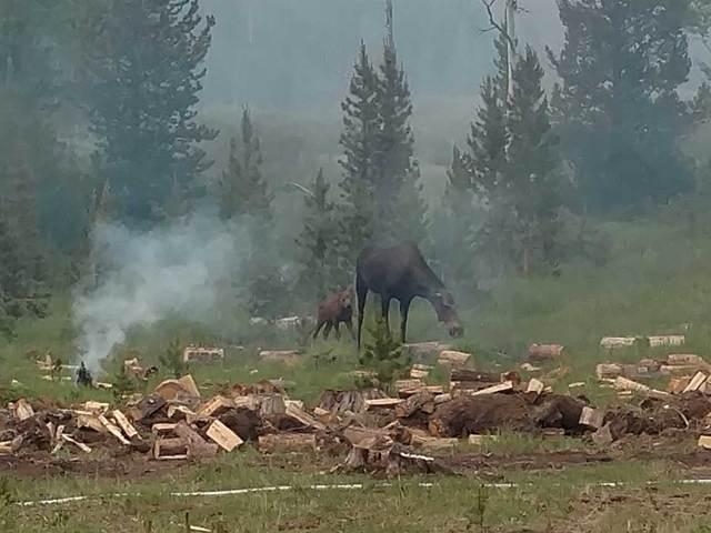 Beaver Creek Fire in Colorado - 7NEWS Denver TheDenverChannel.com