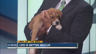 Pet of the day for July 10th