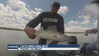 Hunting for a state record walleye