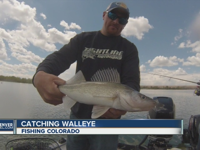 Hunting for a state record walleye at Cherry Creek Reservoir
