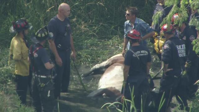 Saving Cupcake: Fire crews work to save stuck horse at ...