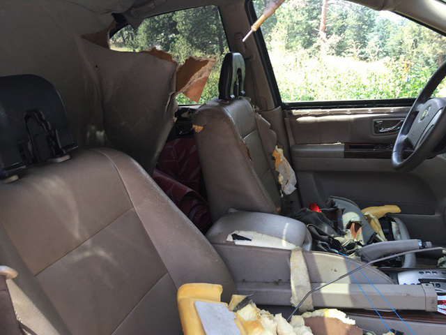 Bear sneaks into car in Evergreen and destroys it