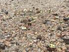 2 suspects ID'd after tacks left on biking road