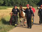 Horse rescued, fell into mud in Arapahoe County