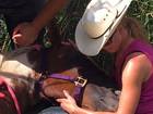 Cupcake the horse recovering after swamp rescue