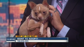 Pet of the day for July 30th