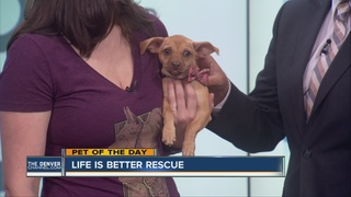 Pet of the day for July 31st