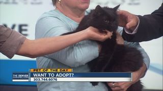 Pet of the day for August 6th