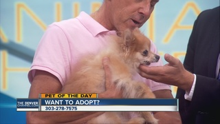 Pet of the day for August 7th